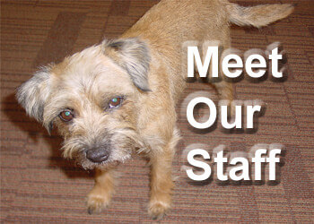Meet Our Staff - About Roofing Supplies