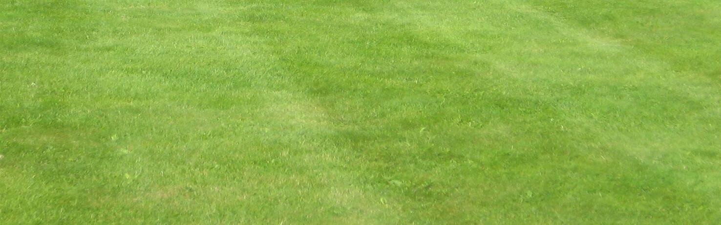 Lawn Repair Mix