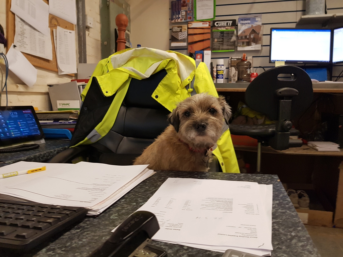 Eave The Dog   About Roofing Supplies